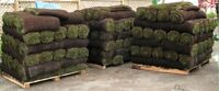 PAVI UNI /GRASS FOR SALE & SERVICE
