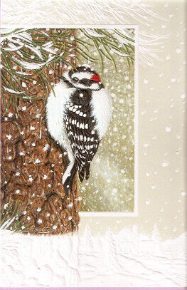 Winter Woodpecker by Shane Dimmick Embossed Christmas Cards Box of 16 Downy^