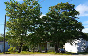Home For Sale on Oversized Lot in Mount Pearl St. John's Newfoundland image 1