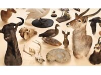 WANTED taxidermy / stuffed animals skulls natural history items