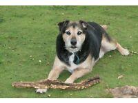 Freya's Dog Walking and Pet Sitting!