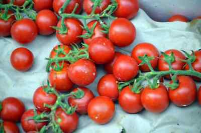 Washington Cherry Tomato *Heirloom* (50 Seed's)