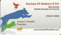 Affordable Bonded and Insured Dog walking