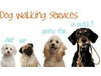 Dog walking service