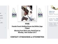 French Bulldog Missing Scunthorpe