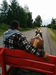 Pour une activité qui sort de l'ordinaire Saguenay Saguenay-Lac-Saint-Jean image 7