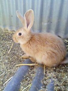 bunnies, bunnies Murray Bridge Murray Bridge Area Preview