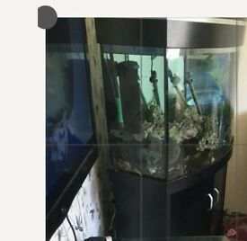 Need gone ASAP offers 3ft bow fronted fish tank