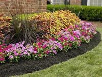 Spring Clean-Up! Lawncare at Affordable Prices!