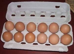 Fertile Chicken Eggs Munno Para West Playford Area Preview