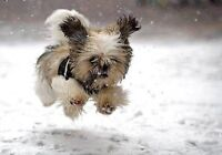 *Snow Removal.* Sign-up TODAY!! $80/Mth! ~>**Amazing Deals!* =].