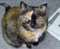 "Adult Female Cat - Tortoiseshell: ""Danni"""