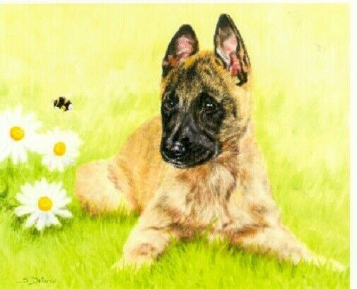 Belgian Shepherd Malinois Limited Edition Puppy Art Print Why So Busy? LAST ONE!