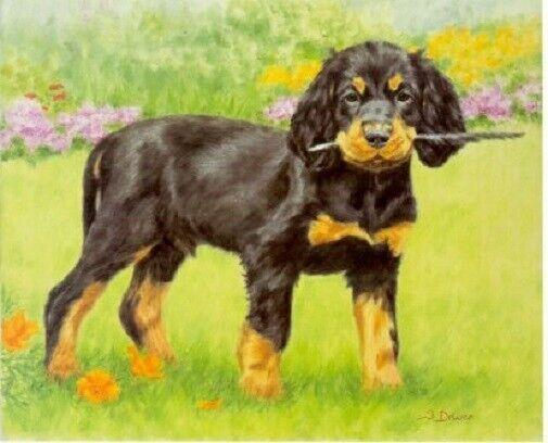 Gordon Setter Puppy Limited Edition Art Print by UK Artist Sue Driver #42*