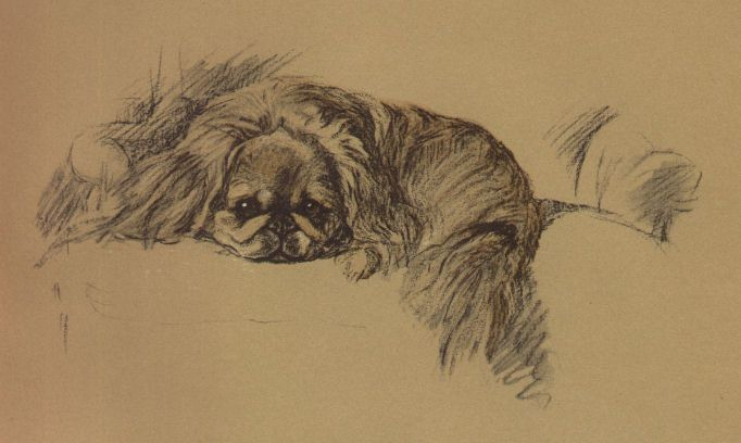 Pekingese - Lucy Dawson Dog Print - MATTED