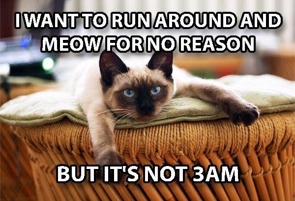 Funny Cat Meme Refrigerator Magnet  Night Meow Run Around Cr