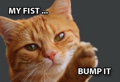 Funny Cat Meme Refrigerator Magnet (3 x 2) Orange Tabby Fist Bump Collectible
