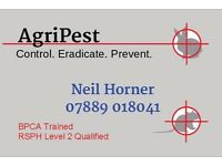 Pest Control - Rats, Wasps, Mice and more