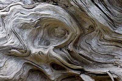 Driftwood Perfume Fragrance Roll on Oil Bottle Rollerball Beach Rain Wood Scent