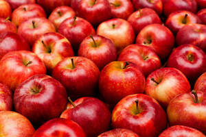 Wanted: Your backyard apples!