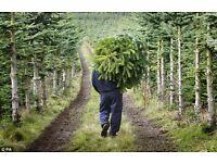 Real christmas trees gorgie road