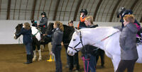 Volunteers required for Opening Gaits Therapeutic Riding Society