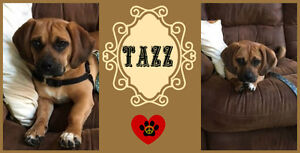 LITTLE TAZZ NEEDS A  FOREVER HOME