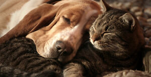 Affordable and Reliable Dog Walking & Pet Sitting Services Windsor Region Ontario image 1