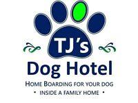 TJ's Dog Boarding - Home Dog Boarding & Dog Daycare - Council Registered & Insured