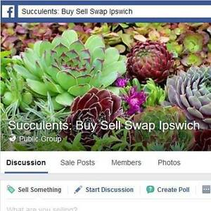 Succulents: Buy Sell Swap Ipswich Woodend Ipswich City Preview