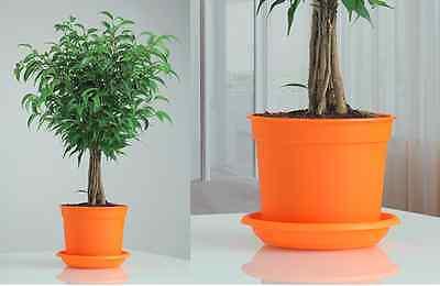 xxxx PACK OF 2 !!!!! xxxx LUXURY Koral plastic  flowerpots  H11 cm