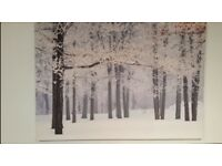 Large Woodland Canvas Picture