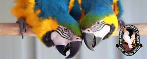 The Parrot Society of Australia (NSW) Inc BIRD SALE Windsor Hawkesbury Area Preview