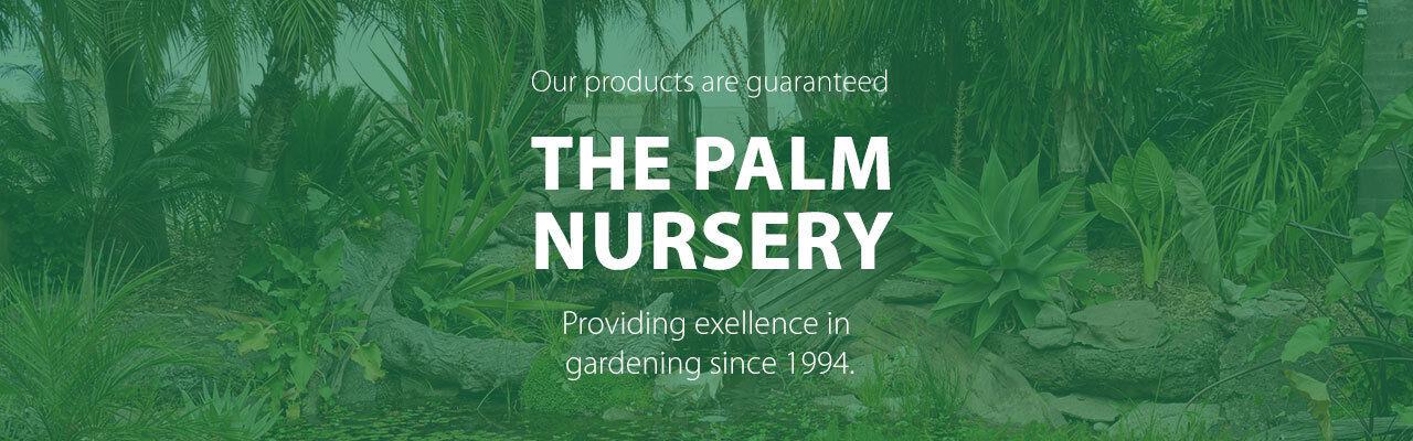 palmplacenursery
