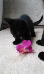 Adorable little kittens looking for forever home