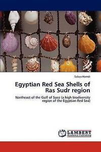 Egyptian Red Sea Shells of Ras Sudr region: Northeast of the Gulf of Suez (a hig