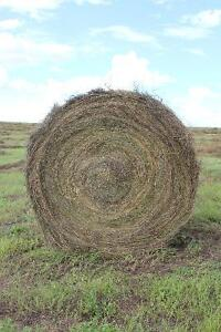 Alfalfa Brome Round Hay Bales for Sale - South of Weyburn