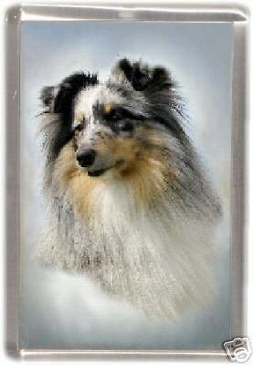 Shetland Sheepdog Fridge Magnet No 5 by Starprint