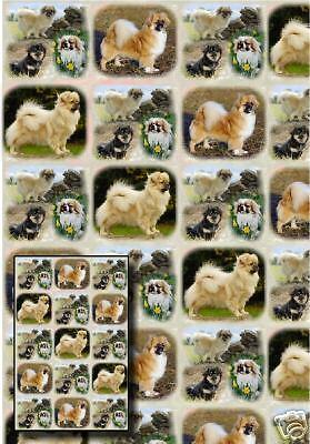 Tibetan Spaniel Dog Gift Wrapping Paper By Starprint