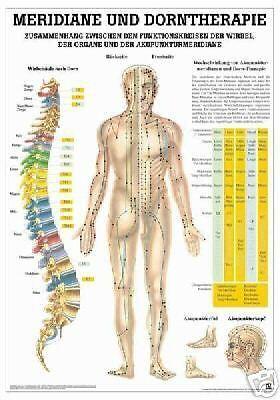 NEU Lehrtafel, Lehrposter: Meridiane und Dorntherapie laminiert