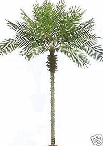 Artificial Palm Tree 5-7-8-10 feet Silk Topiary Plant Date Sago