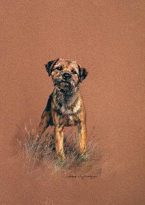 Border Terrier Limited Edition Art Print Attention by UK Debbie Gillingham*