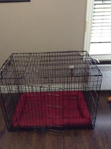 X-large dog kennel with divider and kong bed