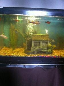 Large fish tank 14 differnt fish stand filter food