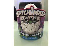Hatchimals Draggles Purple Egg - Brand New