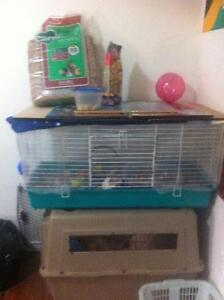 Rat to a new home