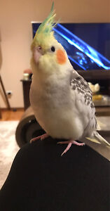 Lost bird noble park 25/7 Noble Park Greater Dandenong Preview