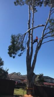 Tree lopping Sydney wide