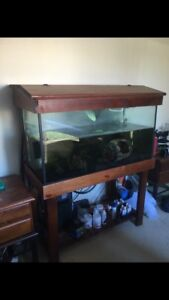 Fish tank Nerang Gold Coast West Preview