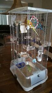 2 budgies with vision cage